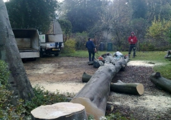 Evergreen Tree Services - Tree Surgery in Guildford