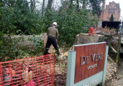 Big Beech Take Down - Tree Surgery in Guildford